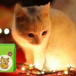 Macska jutalomfalat