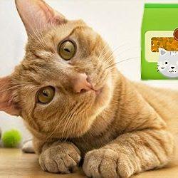 Macska szárazeledel
