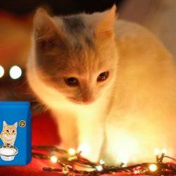 Macska tejpotló