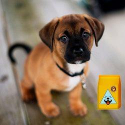 Kutya vitamin